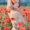 Great and busty redhead Violla A in poppy field